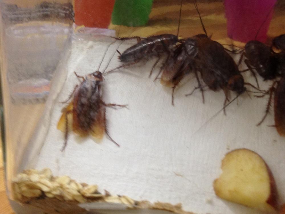 Parasiten und exotische Insekten