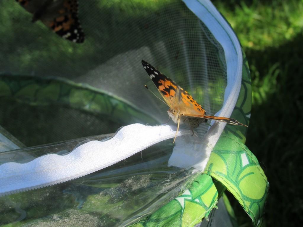 Schmetterling flieg frei ;-)