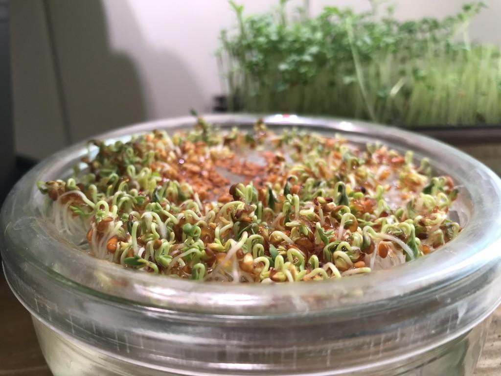 Von Sprossen und veganem Essen