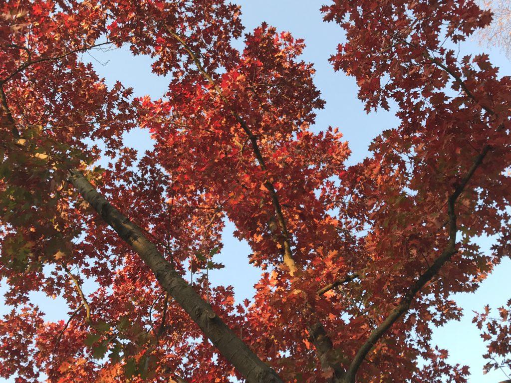 Diese Herbsttage...und Fundstücke!